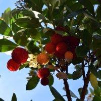 И ягоды и цветы ... и всё осенью... :: Лилия Дмитриева