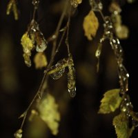ледяная ночь 5 :: Evgeny