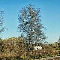 Сибирская глубинка, домик в деревне :: Дмитрий Конев