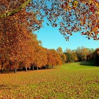 Прощальная Осень :: Alexander