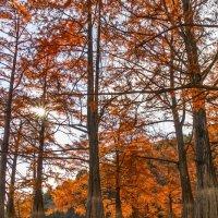 В волшебном лесу :: Елена Васильева