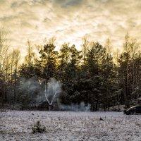 Прогулка в лесу на закате :: Игорь Вишняков