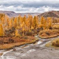 Рыжая осень... :: Галина Шепелева