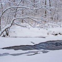 зима вступает в права :: Tatyana Belova