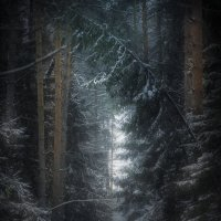 Прогулка в лесу :: Алексей Строганов