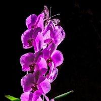 орхидея :: Александр Дьяченко