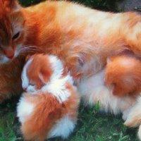 Кошка с котятами :: Svetlana Lyaxovich