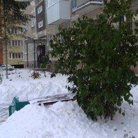 Вот сколько снегу привалило . :: Мила Бовкун