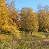 Осень в парках Москвы :: Владимир Безбородов