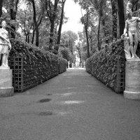 Летний сад в черно-белом... :: Наталья