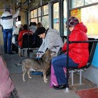 Собачка в трамвае. :: ЕВГЕНИЯ