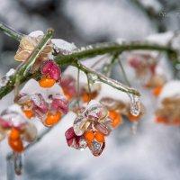 Капризы зимы :: Валерий Пегушев