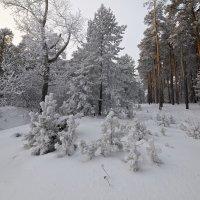 Околдован лес стоит, чудной жизнью он блестит 4 :: Сергей Жуков