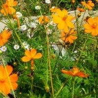 О-ран-же-вый цветочек...! :: Надежда