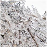 В ледяном плену.... :: Ирина Князева
