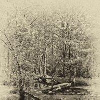 Дорожка в лесу :: Alexander Dementev