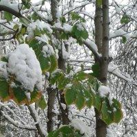 Первый снег :: наталия