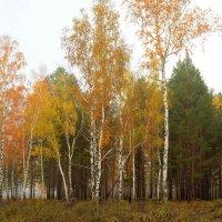 Туманным утром в лесу :: Евгений Карский