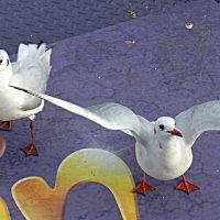 Чайки на корме :: Nina Yudicheva