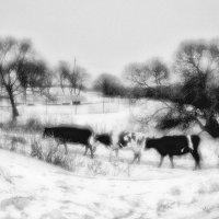Про зимнее молоко :: Андрей Селиванов