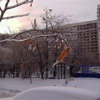 Замёрзли на ветру :: Светлана Лысенко