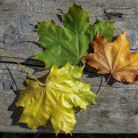 Три цвета осени :: Андрей Дворников