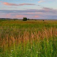 Вечерние краски на лугу :: Александр Березуцкий (nevant60)