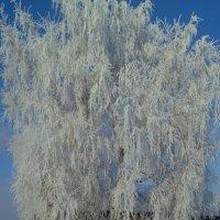 Зимним днем в сибирской деревне :: Сергей Шаврин