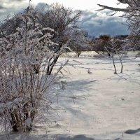 снег выпал.. :: юрий иванов