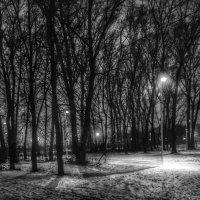 В парке :: Aleksandr Shishin
