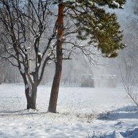 Снежные брызги :: Владимир Постышев