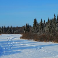 Морозный ноябрь :: Вера Андреева