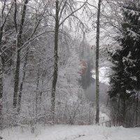 Осенне зимний пейзаж :: Mariya laimite