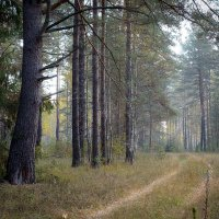 Владимирский лес :: Юрий Савченко
