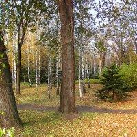 Осень в парке :: super-krokus.tur ( Наталья )