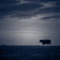 бодрая корова... :: Екатерина