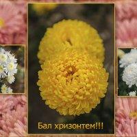 Никитский ботанический сад. :: Марина Брюховецкая