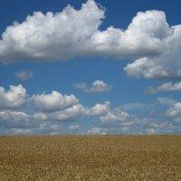 Белый,пшеничный и небесный. :: ЕВГЕНИЯ
