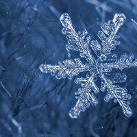 Сезон снежинок открыт :: derber d