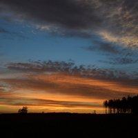 Лесное зарево заката. :: Mitcu-Ray