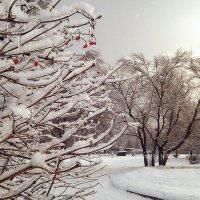 Зима в парке :: Денис Масленников