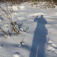 Ноябрь,зимний... :: Владимир Холодницкий