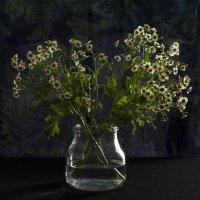Простые цветы :: Alla S.