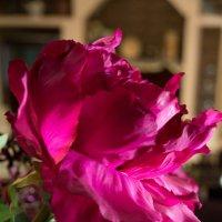 Цветок :: Kristina Suvorova