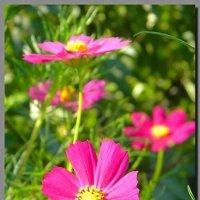 цветы во  дворе. :: Ivana