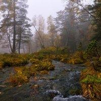 Осенние воды Архыза :: Скан