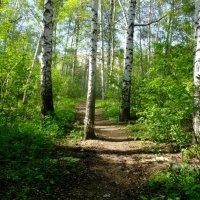 В лесу :: Вячеслав Баширов