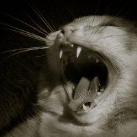 Гроза мышей... :: Sergey Apinis
