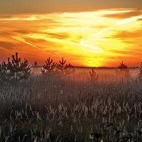Восход у деревни Никулино :: Валерий Толмачев