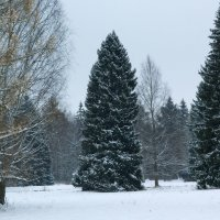 Зимняя осень :: Aнна Зарубина